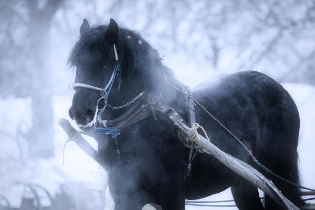 小西正尚の思い出:馬橇編